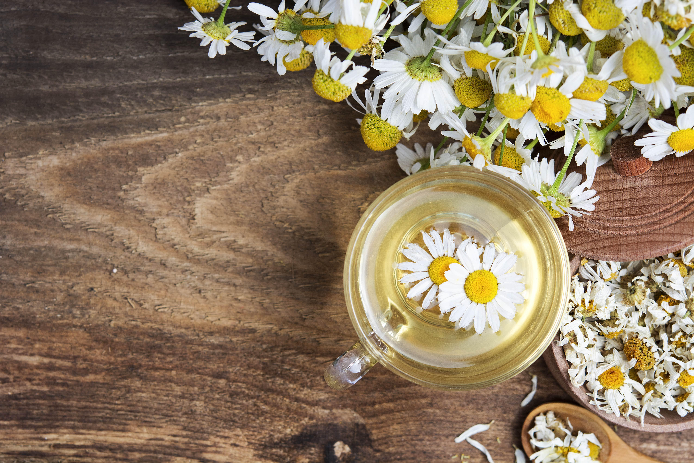 Ромашка аптечная (лекарственная трава) - полезные свойства 47