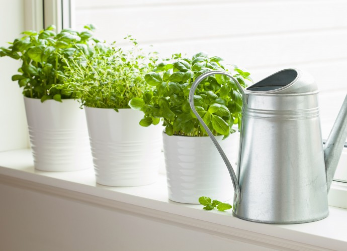 Полезные растения выращивание дома 11