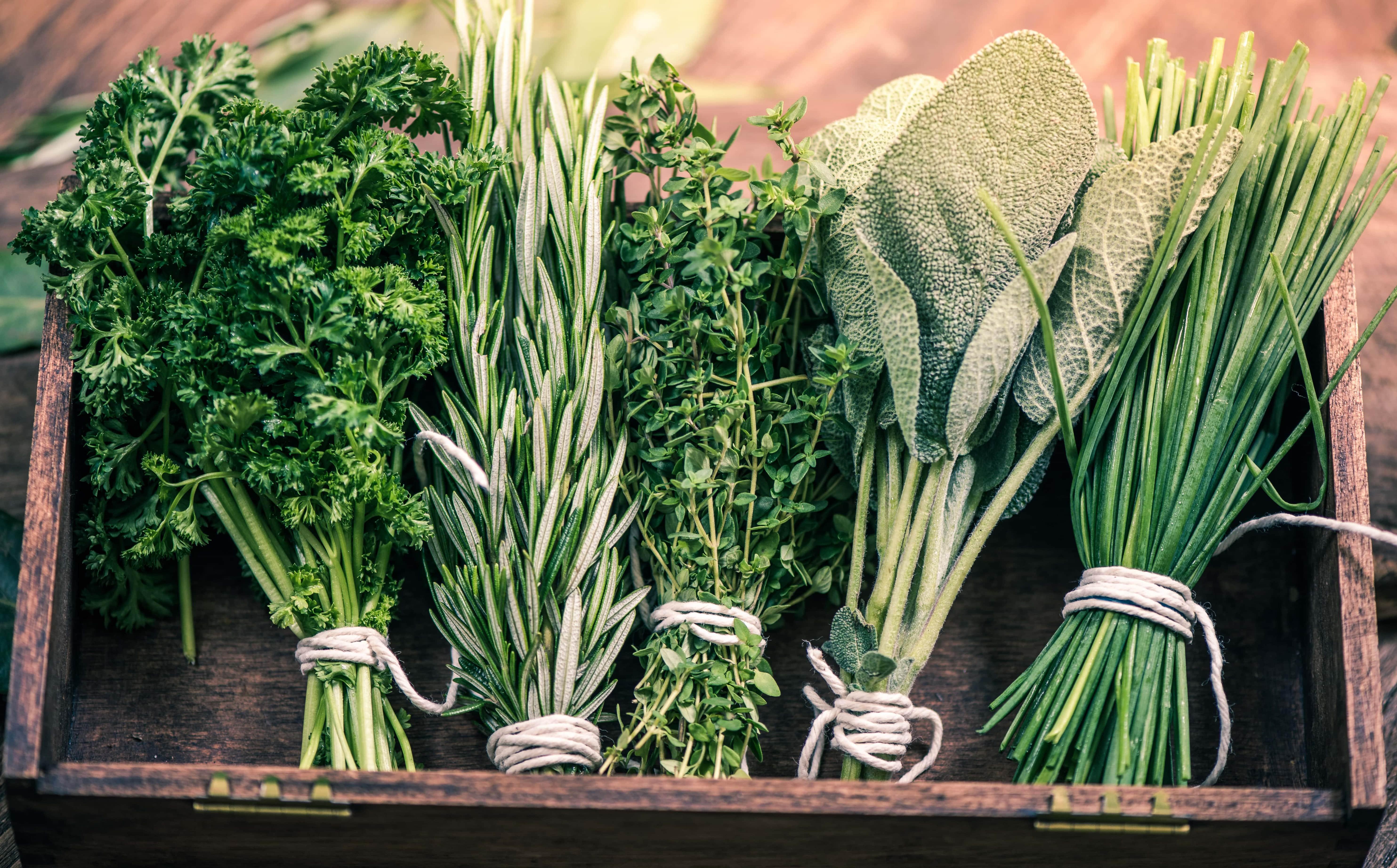 Лекарственные растения: сбор, обработка, сушка, хранение